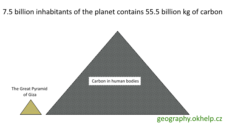 carbon-in-human-bodies