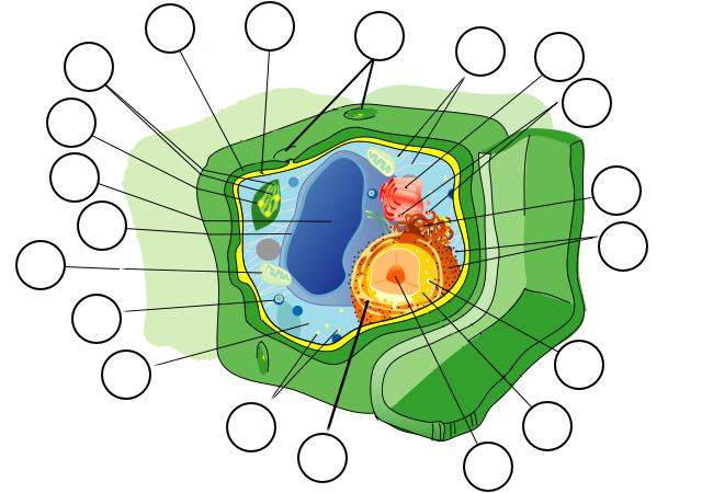 obrazek bunka rostlin
