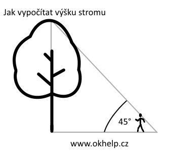 jak-urcit-vysku-stromu.png