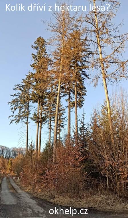 kolik-tun-dreva-z-hektaru-lesa.jpg