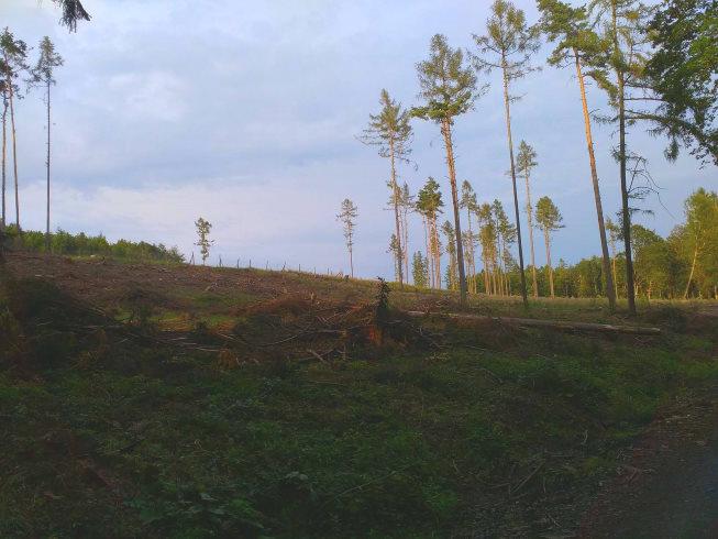 kůrovec kalamita les