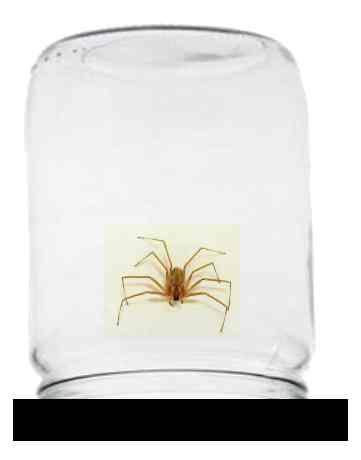 pavouk-pod-sklenici.jpg