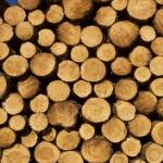prostorovy-metr-dreva.png
