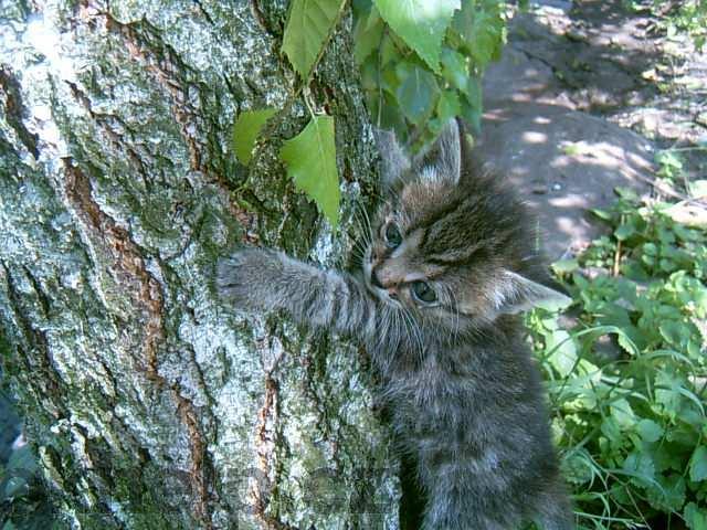 Kotě leze na strom